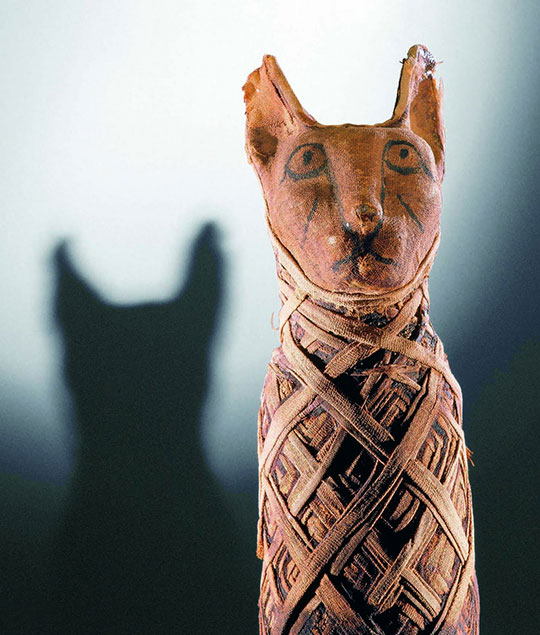 cat mummy egyptian