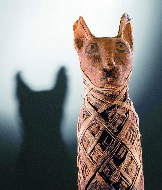 cat mummy egyptian
